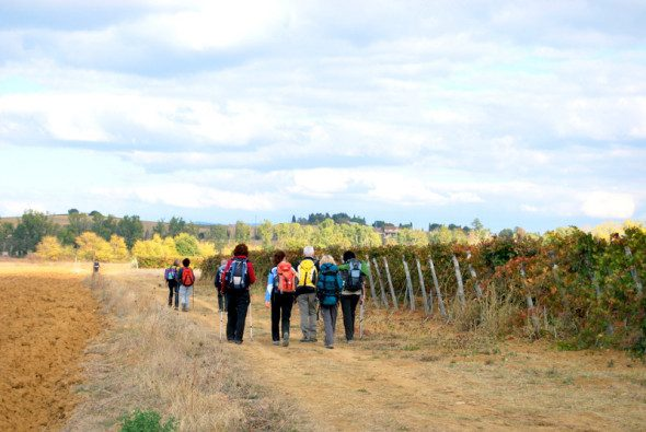 Francigena in terra di Siena 10