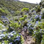 In cammino sulle isole vulcaniche, la magia delle Azzorre